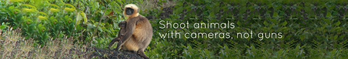 Shoot animals with cameras, not guns